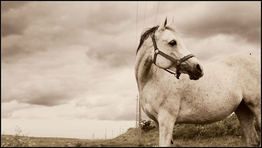 Animal Themes Bridle Cloud - Sky Day Domestic Animals Horse Horse Life Horse Photography  Horses Livestock Mammal Nature No People One Animal Outdoors Sky Standing Tree