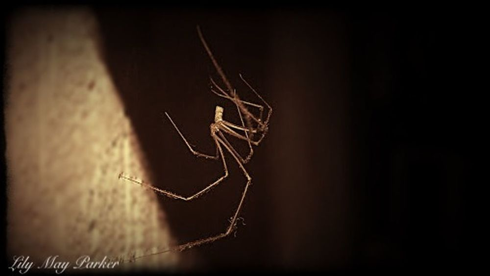 Lurking from the Shadows Check This Out Hello World Relaxing Hanging Out From My Point Of View Spider Spiders Beautiful Lily May Parker Showcase: January EyeEm Gallery Lily Nature Taking Photos Eyem Nature Lover For Once To Live