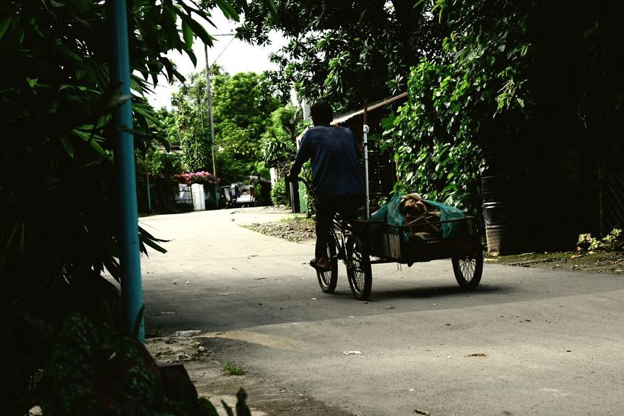 Work Tree Adult People Road Outdoors Rural Scene One Man Only Adults Only One Person Transportation Philippines