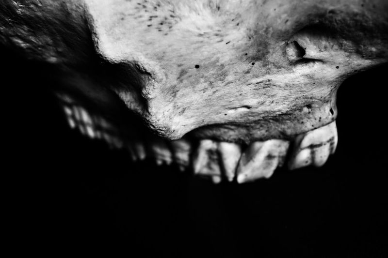 skull abstraction 06 darkness and light Skull Bone  Macro Photography Black And White Black And White Photography Full Frame Bokeh Selective Focus Teeth Close-up Animal Nature Textured  Extreme Close-up