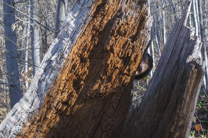 Girl peeking behind the rotten tree trunk Looking At Camera Peeking Through Shadows & Lights Sunshine And Shadows Close-up Day Eye Watching You Forest Forest Photography Girl Peeking Hidden Beauty Hiding Nature Old Tree Trunk One Animal Outdoors Peekaboo Rotten Wood Seeking Smile Tree Tree Trunk Tree Trunk, Tree, Fallen Tree Wood - Material