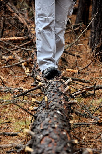 Low section of person standing on tree trunk