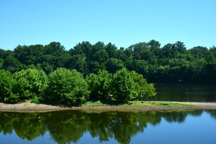 Delaware River! Tree Water Clear Sky Forest Blue Reflection Tree Area Sky Green Color Plant Tree Reflection Green Color Scenics - Nature Beauty In Nature Nature No People WoodLand Non-urban Scene Outdoors Day Land