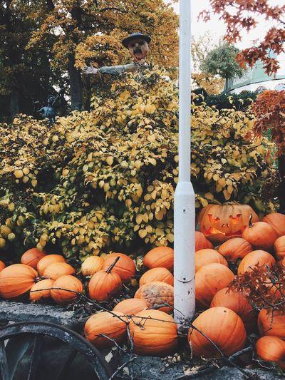 Happy Halloween 🎃 Halloween Pumpkin Autumn Scarecrow Iphone6s