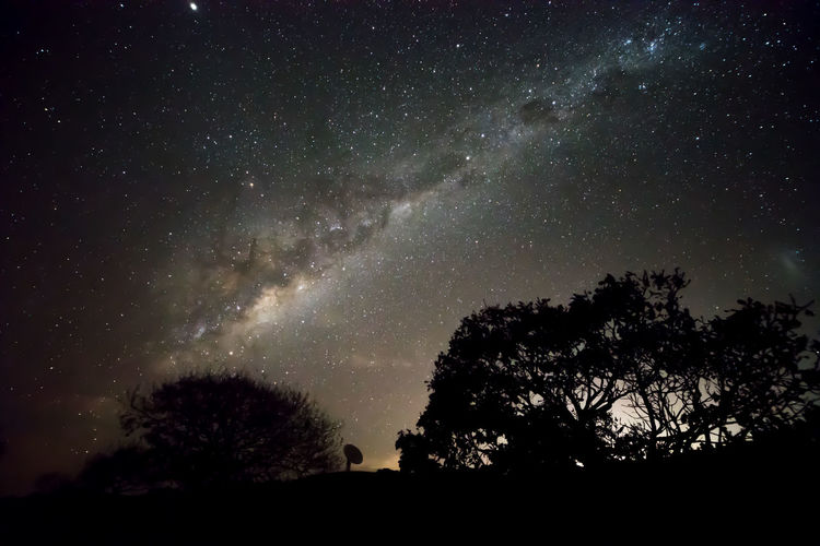 Beauty In Nature Galaxy Nature Newzealand Night No People Nzphotography Outdoors Panther Plant Scenics - Nature Sky Space Star Star - Space Star Field Tree