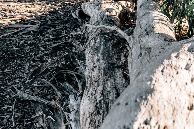 Plant Tree Trunk Tree Trunk Land Nature No People Day Forest Growth Close-up Tranquility Field Outdoors Textured  Beauty In Nature Plant Bark WoodLand Selective Focus Wood - Material