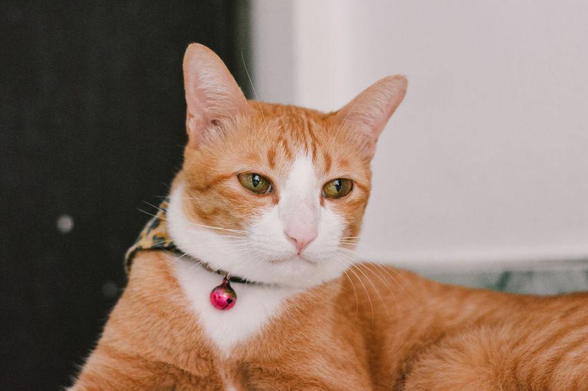 Animal Cat Cats Cat♡
