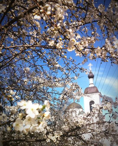 Happy Easter! Полоцк Polotsk PolotskCity родина MyCity❤️ I Like It Spring Flowers First Flowers Of Spring Springtime Spring Is Coming  Nature_collection Chirch Chirchstreetsocial