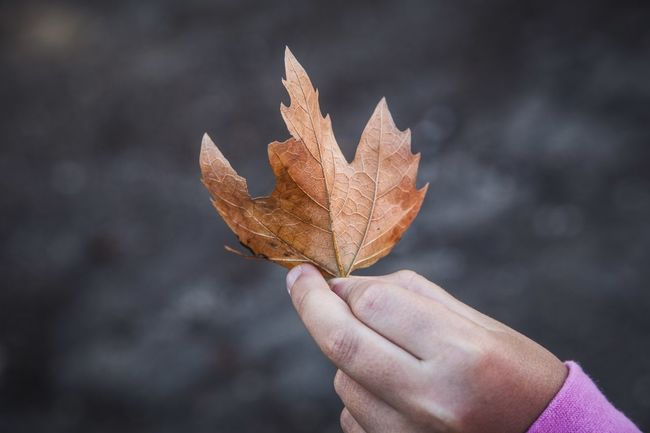 People Unrecognizable Person Close-up Holding Outdoors Human Body Part Change Maple Leaf One Person Human Hand Autumn Leaf EyeEm Selects