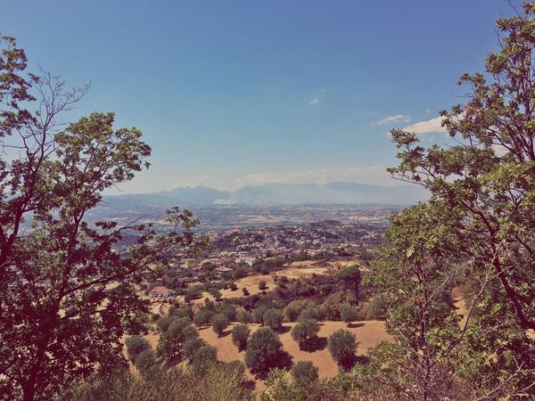 Calabria Photo Beauty In Nature Tree Nature Scenics Tranquility No People Tranquil Scene Growth Outdoors Landscape Branch Mountain Range Flower Plant Sky Freshness