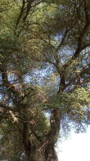 Treetop Nature