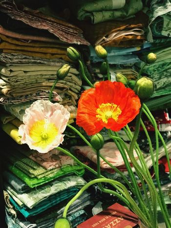 Popi Poppy The Power Of Flowers Melbourne Flower Flowering Plant Plant Freshness Beauty In Nature Close-up