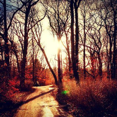 In the woods of Berlin Germany Winter Trees Sun Sunsetporn Deutschland Igs_world Igs_germany Igs_berlin Igs_europe Colors Coldbutcozy