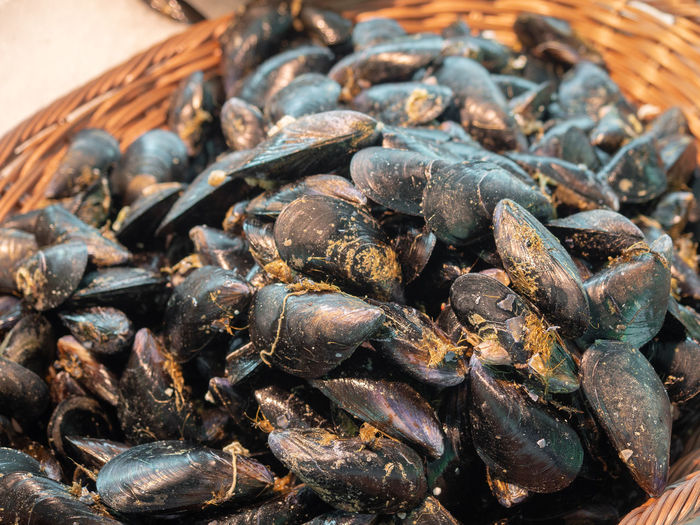 Clam Food And Drink Food Arles France Provence Market Market Stall Farmer Market Farmers Market Seafood Heap Mussel Healthy Eating Black Mussels Shell Seafood Still Life Basket Stall Seashell Fish Market