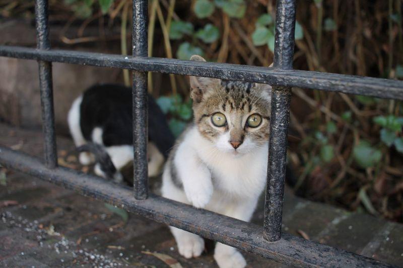 Wild kitten in