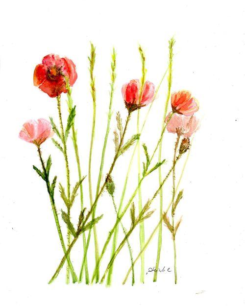 EyeEm Selects Flower Nature Flower Head Summer Beauty In Nature Summertime EyeEm Nature Lover Art ArtWork Art, Drawing, Creativity Painting Watercolours Watercolors  Aquarelle Aquarellpainting Aquarell Poppy Flowers Poppy Poppies