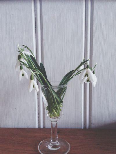 Snödroppar Flowers Interior Design Nature Vintage