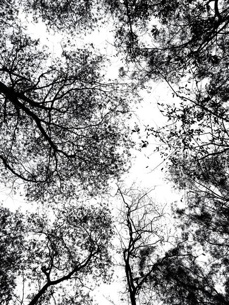 Nature Nature Photography Naturelovers Dawn Pleasant Art Leaves Noflowers Tree Patterns In Nature Branches And Sky Branches Eyeemselects Blackandwhite Black Backgrounds Full Frame Ink Silhouette Pattern Abstract Close-up Sky Flock Of Birds Textured  Detail Pixelated LINE
