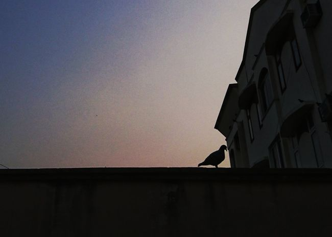 Sunset Built Structure Sky No People Architecture Outdoors Day Sony Xperia XPERIA Xperiaphotography Z5 Z5 Photography Vijayawada India Cloud - Sky Nature Tranquility XperiaZ5 Pigeon Silhouette Golden Hour