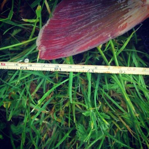 Rating Carp Fish Fishing 48 Kapr Ulovek