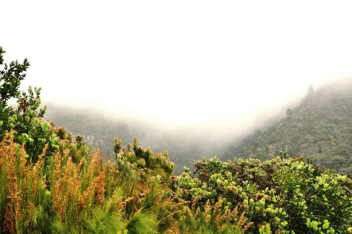 Nature Nature_collection Fog Foggy Morning Foggy Weather Botanical Gardens Botanic Landscape Landscape_Collection Landscape_photography Kirstenbosch Mountains Green Grass Nature Photography Landscape #Nature #photography The Great Outdoors - 2017 EyeEm Awards
