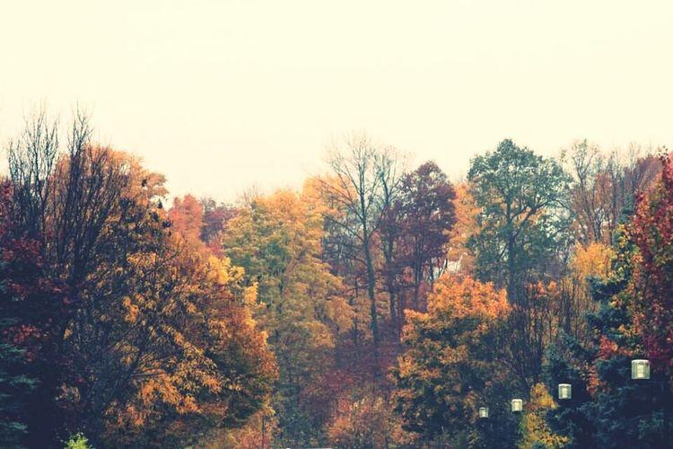 Fall First Eyeem Photo