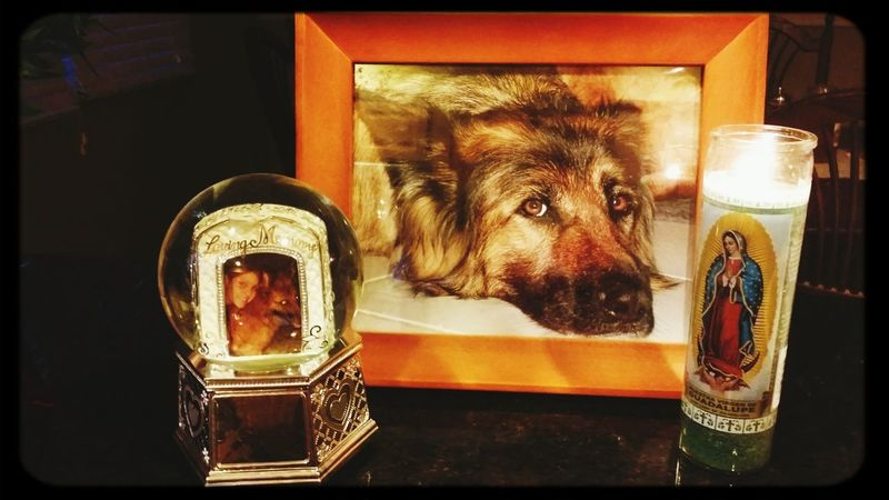R.I.P. sweet process Zena German Shepherd Memorial Dogs Daughter