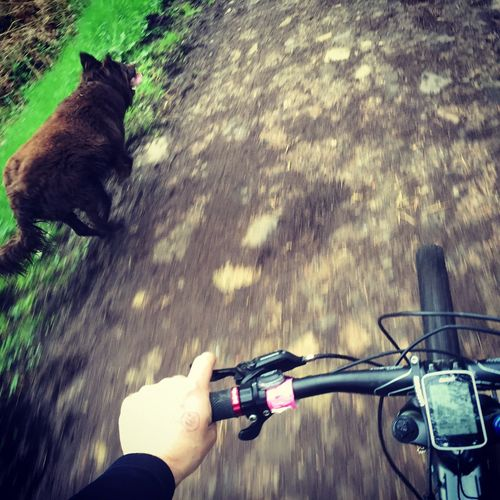 Cyclist with dog running at park
