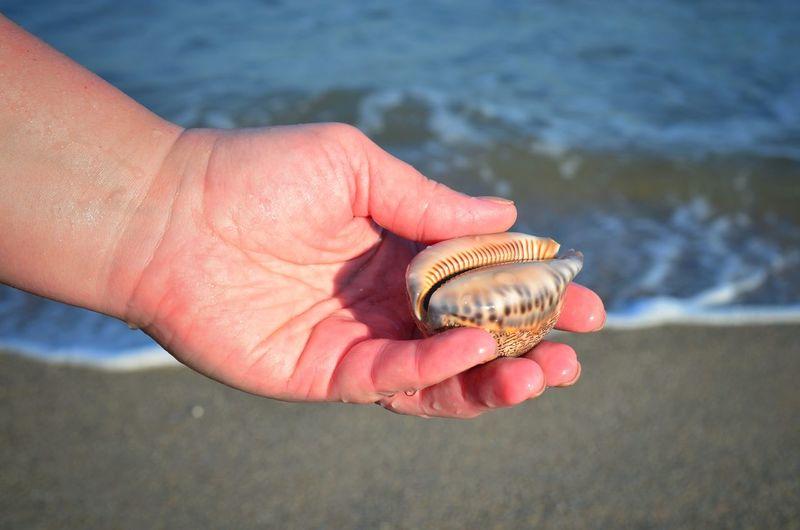 Close-Up Of Hand Holding Seashell At Beach