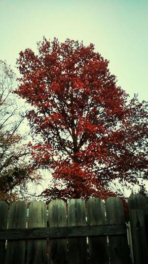 Fall Trees Fall Leaves Fall