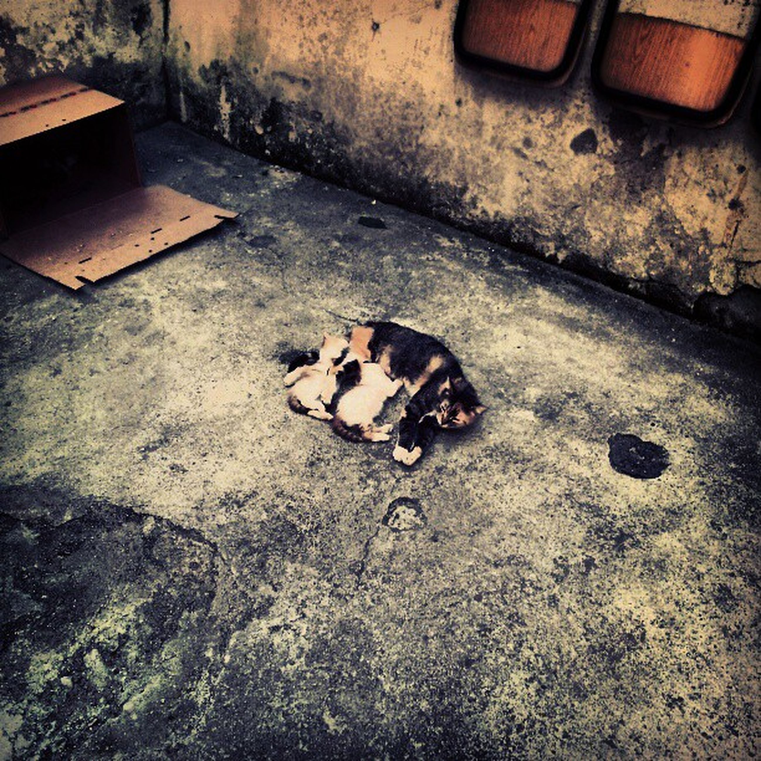 animal themes, high angle view, abandoned, domestic animals, one animal, indoors, cat, damaged, pets, no people, obsolete, domestic cat, flooring, dirty, ground, deterioration, messy, mammal, floor, run-down