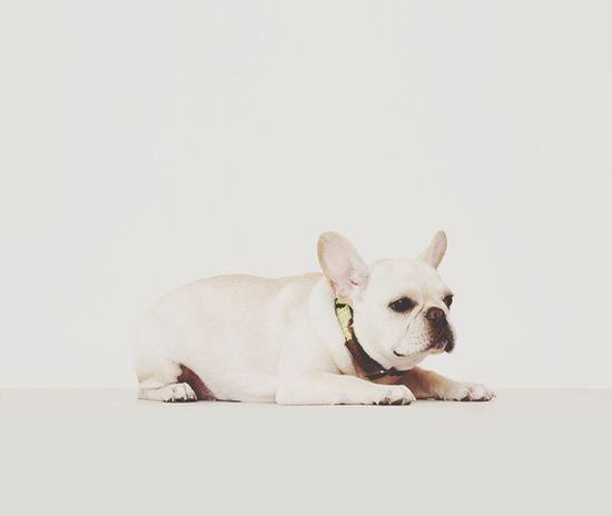 I Love My Dog My Puppy ❤ Frenchbulldog Family❤