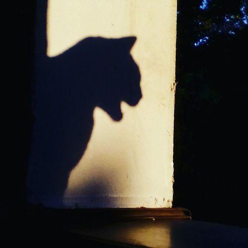 Roarrr!! Cats 🐱 Shadow Miauuu 😺 Cat Sunshade Animal