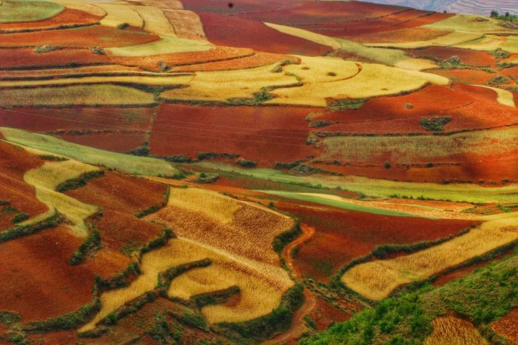 Yunnan China China Landscape Landscape_Collection Landscape_photography Multi Colored Terraced Field Rural Scene Backgrounds Agriculture Full Frame Pattern Textured  Landscape Patchwork Landscape Rice Paddy Satoyama - Scenery Farmland Plantation Cultivated Land Rice - Cereal Plant