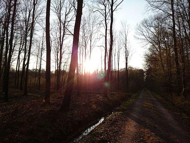 Wieczorny spacerek z psem 😄 Sunset Sun Forrest Trees Tree_captures Zachódsłońca Las Spacer Spacerek Niebo Słońce Sun Walk Instalike Inspiration Mobilephotography