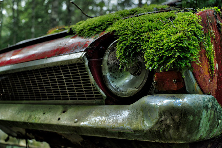 Close-up of moss on abandoned car