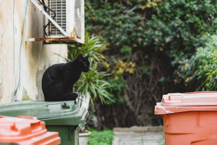 Black cat in a back yard