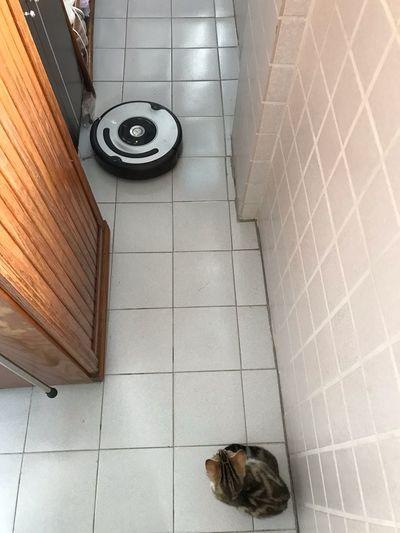 EyeEm Selects Animal Themes Tile High Angle View Animal Flooring Tiled Floor One Animal Indoors  Pets No People Domestic Animals Domestic Mammal Vertebrate Cat Feline Pattern