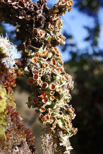 Plants 🌱 Nature Photography Páramo