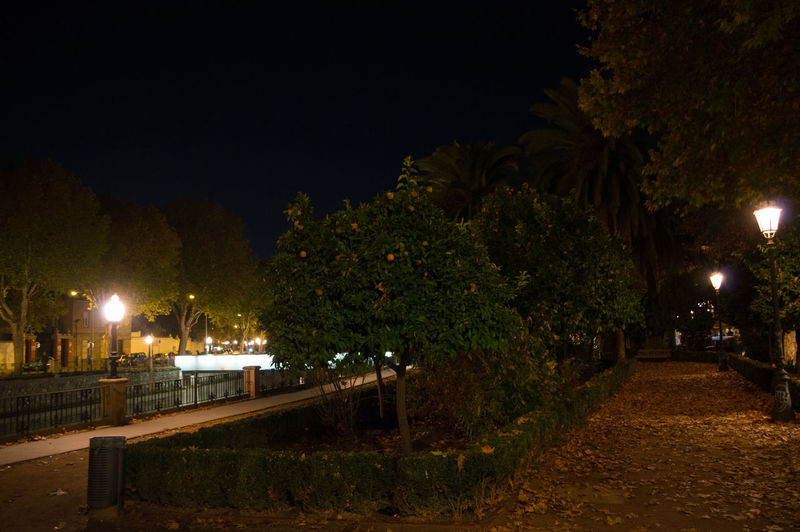 Granada, Spain SPAIN Andalusia Sacromonte Night Illuminated Street Light Plant Lighting Equipment Tree Street Nature Architecture No People Footpath Growth City Outdoors Building Exterior The Way Forward Built Structure Park Sky Direction Light
