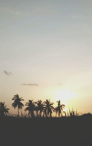 Palm Tree Sunset Tree Silhouette Tropical Climate Nature Sky Heat - Temperature Tranquility Outdoors Sun Travel Destinations Travel Scenics Cloud - Sky Tranquil Scene No People Landscape Beauty In Nature Vacations
