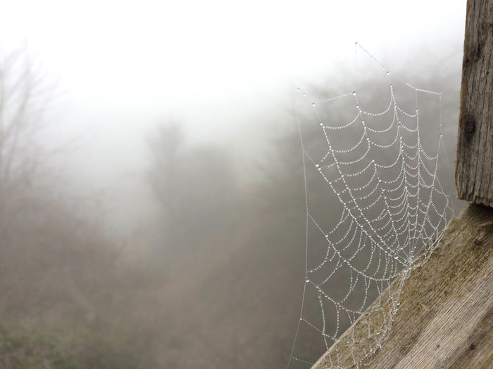 Animal Animal Themes Beauty In Nature Close-up Complexity Day Focus On Foreground Fog Fragility Intricacy Nature No People Outdoors Pattern Spider Spider Web Tranquility Trapped Vulnerability