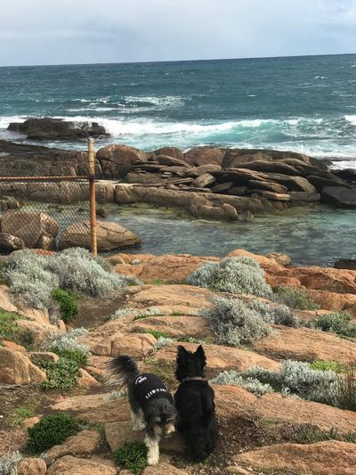 Let's Go. Together. Getty Images Pets Sea Dog Domestic Animals Outdoors Shootermag TheMinimals (less Edit Juxt Photography) Shootermag_australia He Will Shelter You Under His Wings...