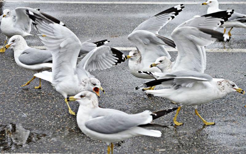 Avian Bird Day Medium Group Of Animals No People Outdoors Sea Bird Seagull White Color