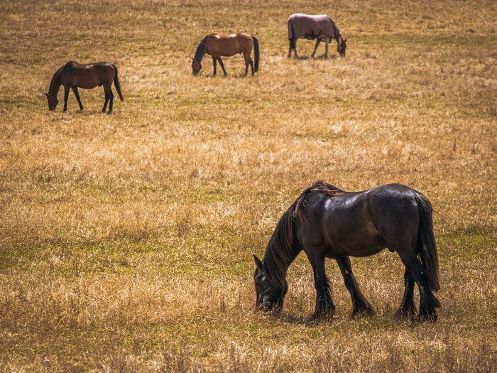 Scenic Horse