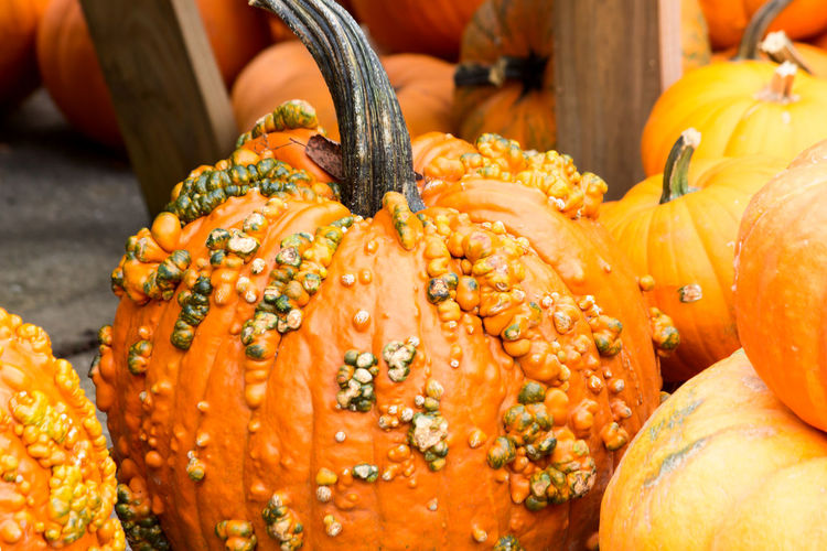Pumpkin Abundance Autumn Autumn Colors Backgrounds Beauty In Nature Close-up Day Detail Fall Colors Focus On Foreground Freshness Full Frame Holiday Nature No People Orange Color Organic Pumpkins Selective Focus Still Life Thanksgiving