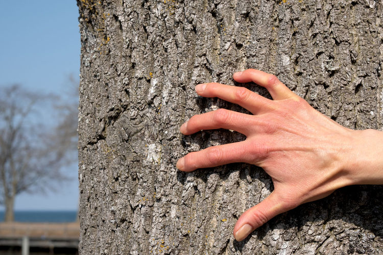 hand and cortex Bark Bark Texture Close-up Cortex Fingers Focus On Foreground Hand Human Body Part Human Face Human Hand Scratch Stiff Tendons