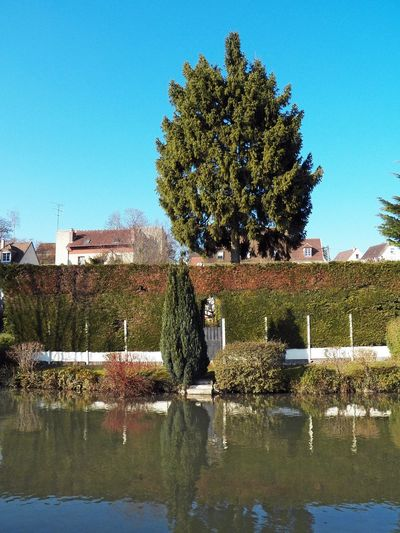 Thuya panorama River Photography Reflection In The Water Fur Reflection Thuja Green Green Green!  Trees Reflection Entrance In The Fur Trees Day Outdoor Blue Sky Thuyas Vertical Photography France