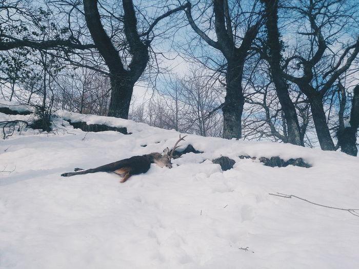 Deer killed by