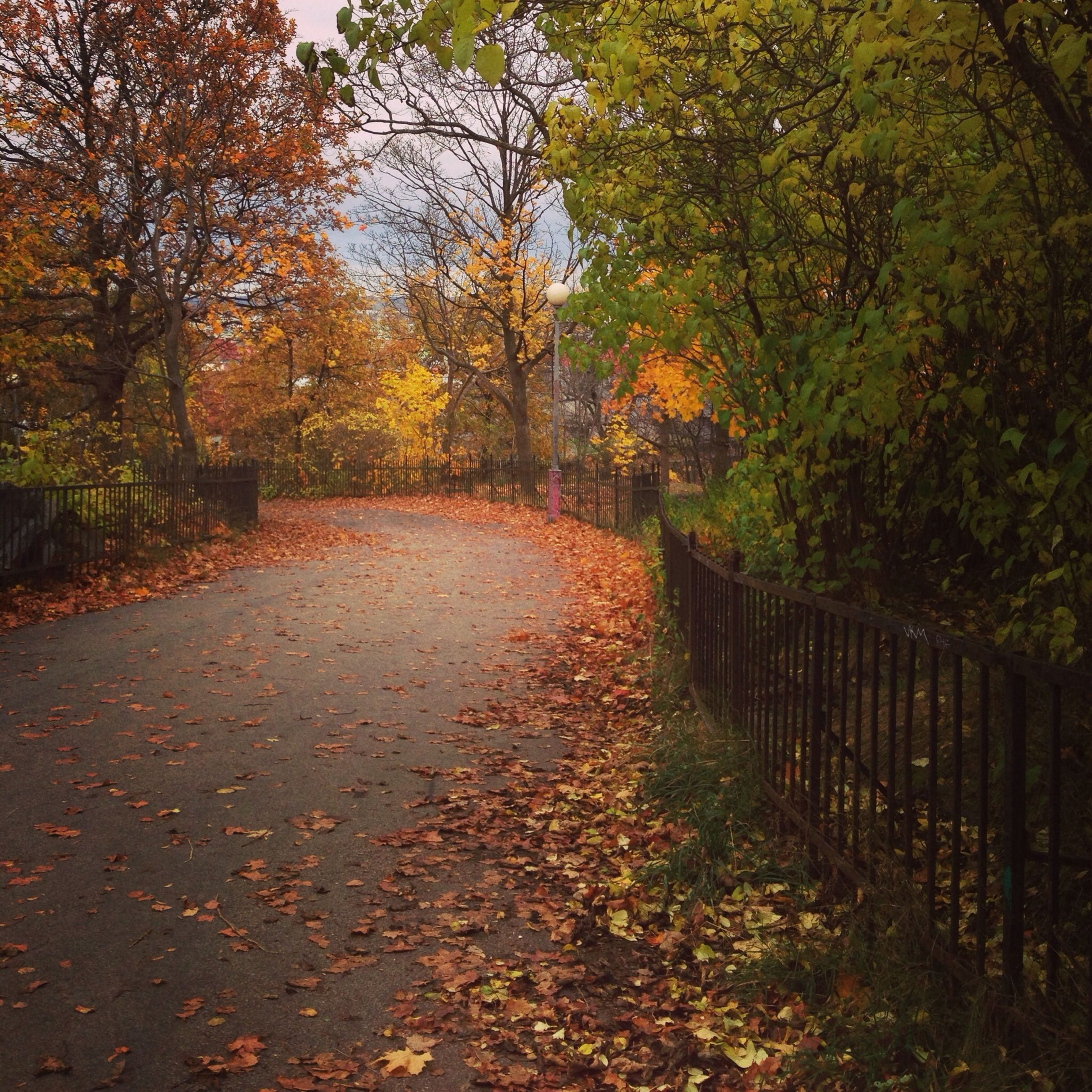 tree, autumn, the way forward, change, season, leaf, tranquility, diminishing perspective, nature, vanishing point, tranquil scene, fallen, branch, beauty in nature, orange color, footpath, transportation, growth, forest, road
